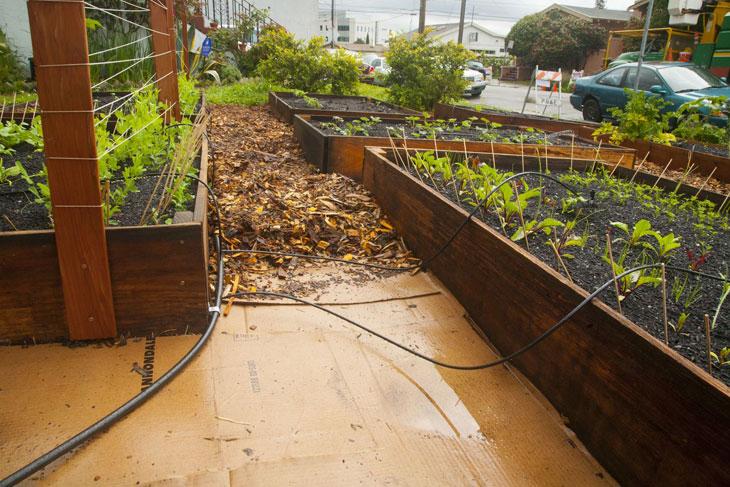 cool-plants-lawn-irrigation-system
