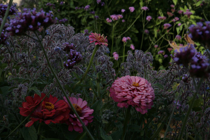 cool-plants-lawn-flowers-pink