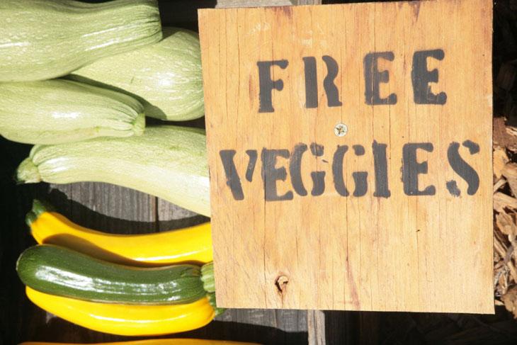cool-plants-lawn-free-veggie-sign