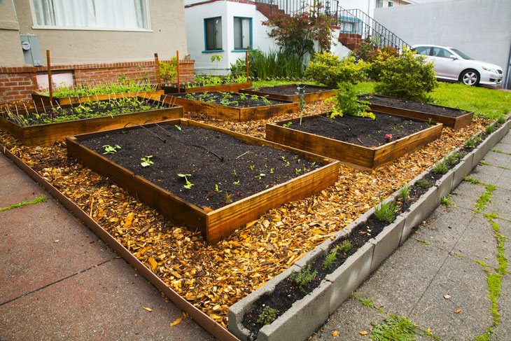 cool-plants-lawn-wood-chips
