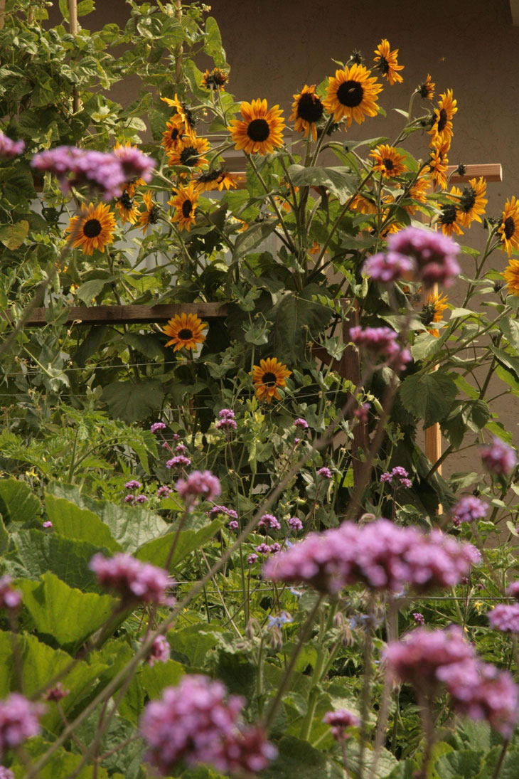 cool-plants-lawn-sunflowers