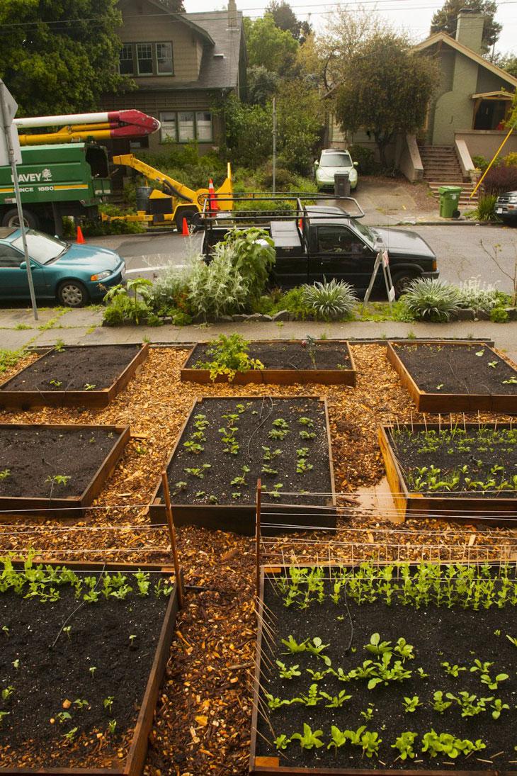 cool-plants-lawn-growing-street