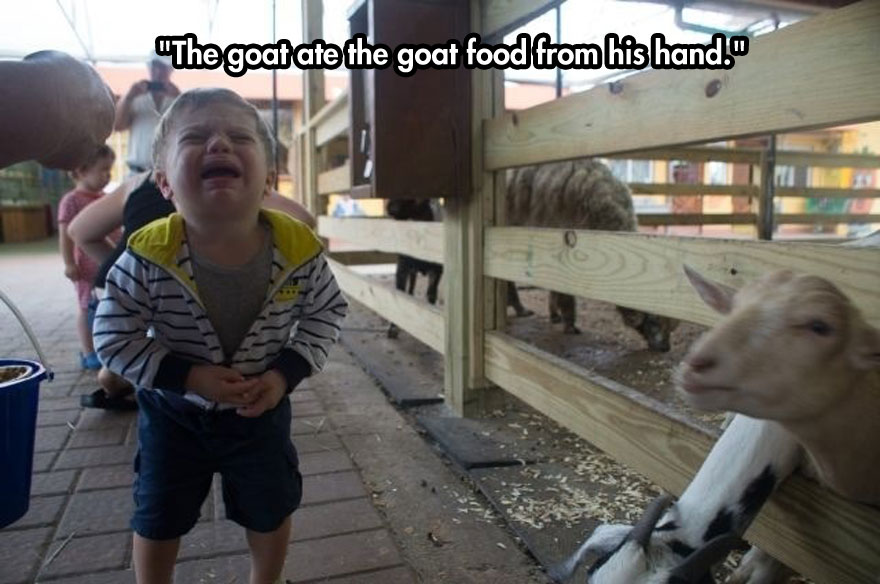 funny-baby-crying-goat-zoo