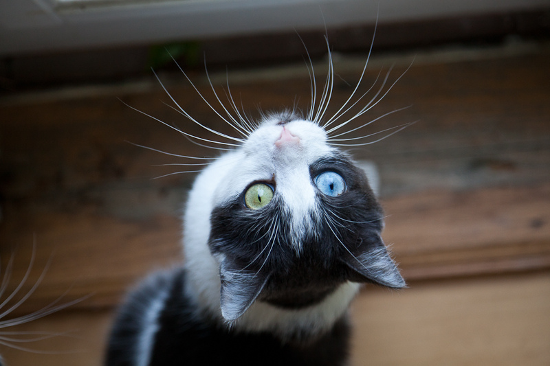 One Cat, 2 Sets of Whiskers