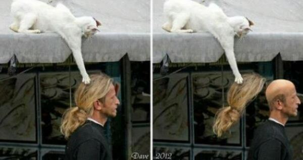 cat-thefts-01