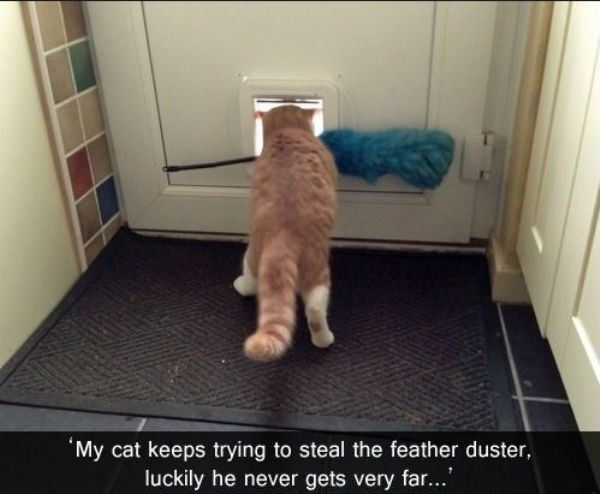 cat-thefts-161