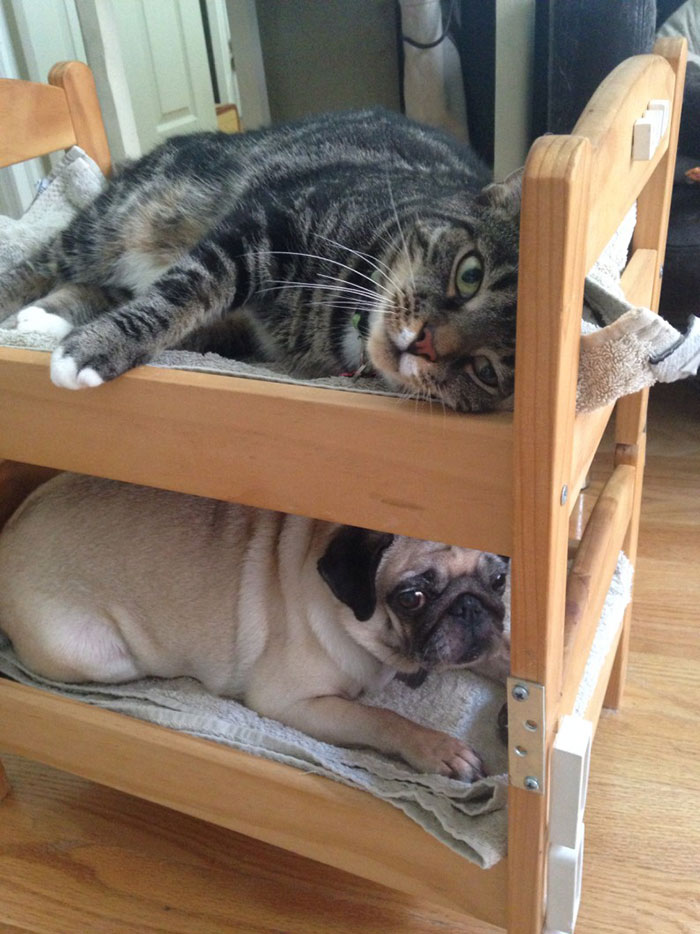 ikea-duktig-bed-hack-cat-bed-11