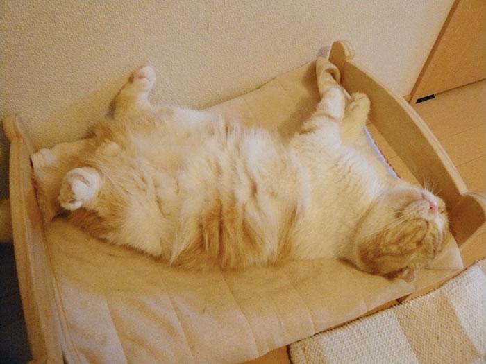 ikea-duktig-bed-hack-cat-bed-23