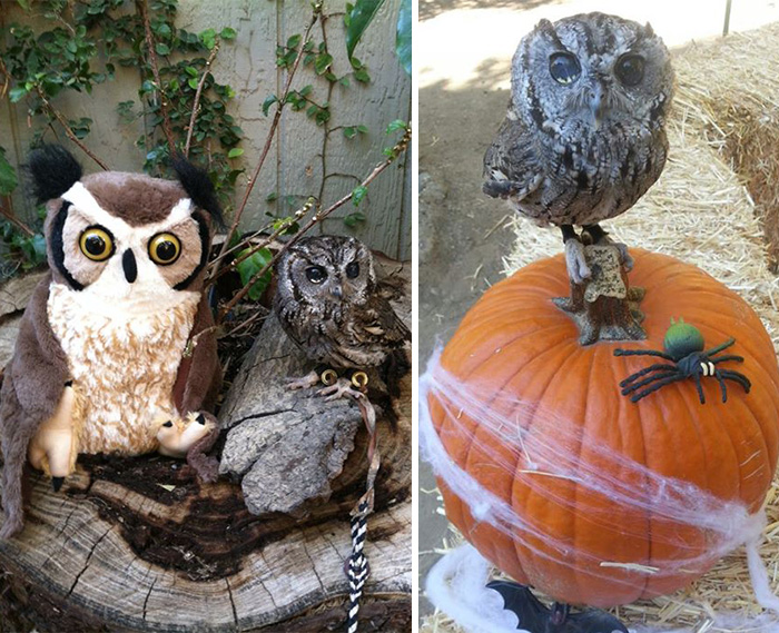 rescued-blind-owl-zeus-4