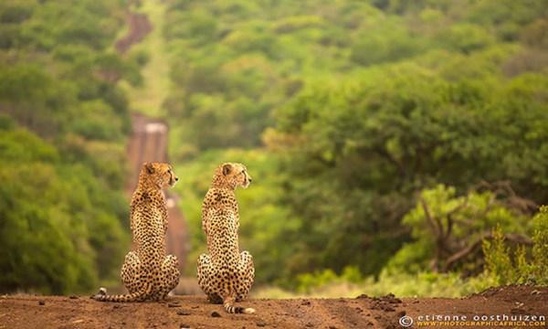 animal-twins-two-similar-lookalikes-203