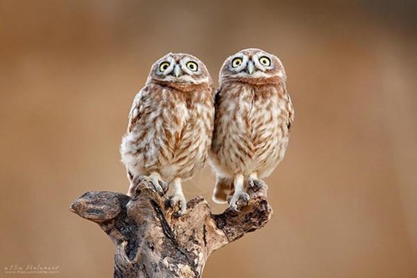 animal-twins-two-similar-lookalikes-205