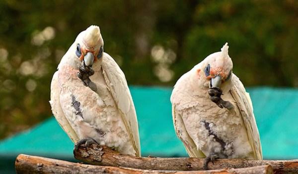 animal-twins-two-similar-lookalikes-209