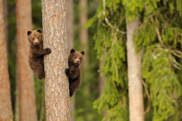 cute-animals-twins-13