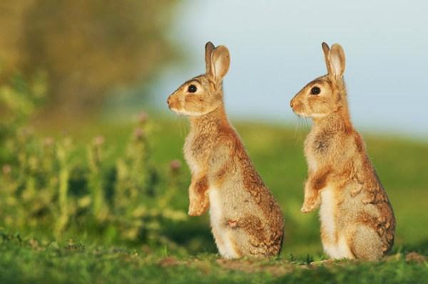 cute-animals-twins-24