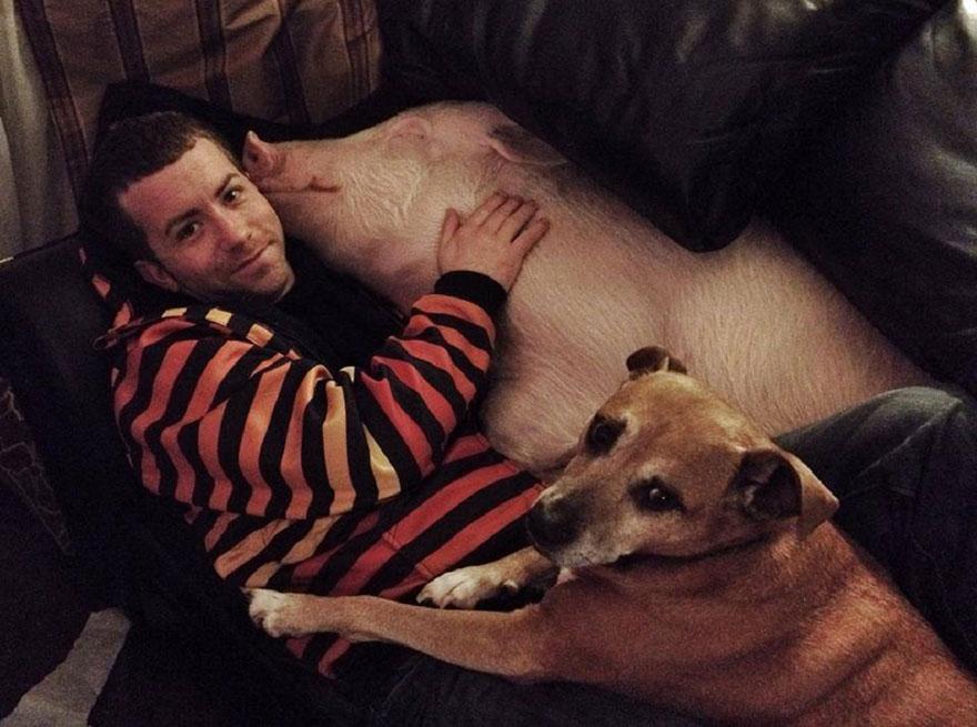 esther-wonder-pig-sanctuary-steve-derek-43