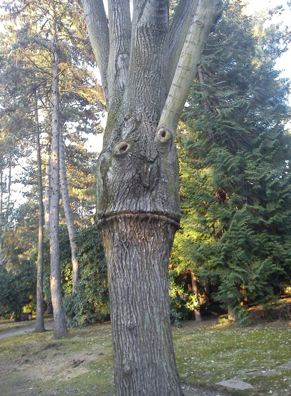 tree-nightmare