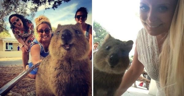 Capybara selfie