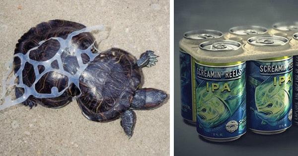 Edible Six Pack Rings Feed Marine Wildlife Instead Of Harming It