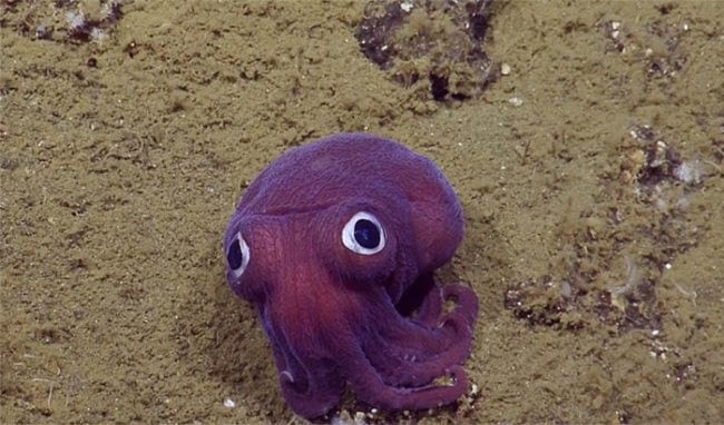 stubby-squid-googly-eyes-3a